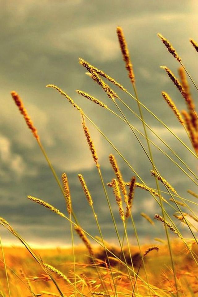 دانلود+عکس+طبیعت+برای+موبایل