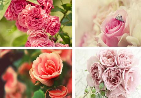 عکس های فوق العاده زیبا از گل ها