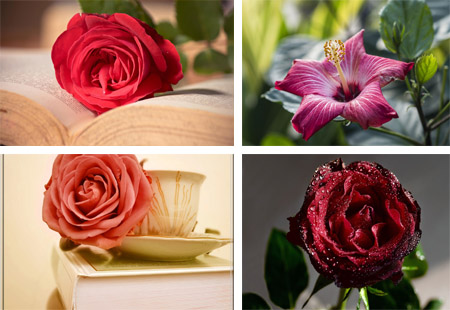 عکس های جدید از زیباترین گل های جهان