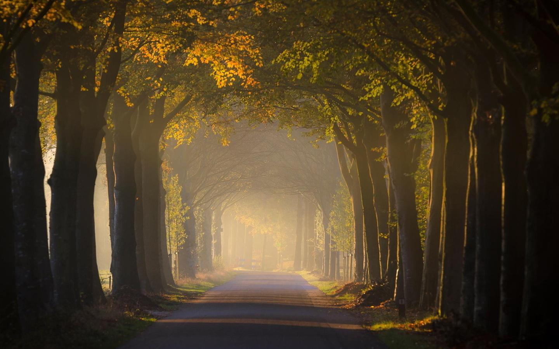 عکس طبیعت پاییز با کیفیت بالا